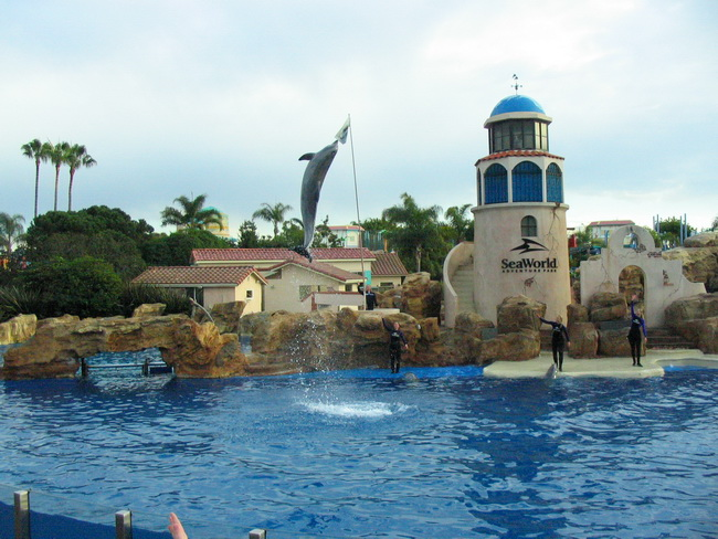 Dolphin_jumping